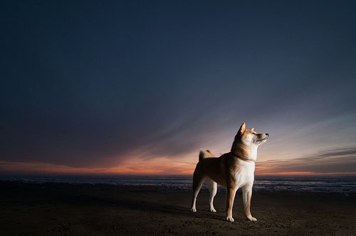 Tips for a Better Pet Photography - Capture the dynamism