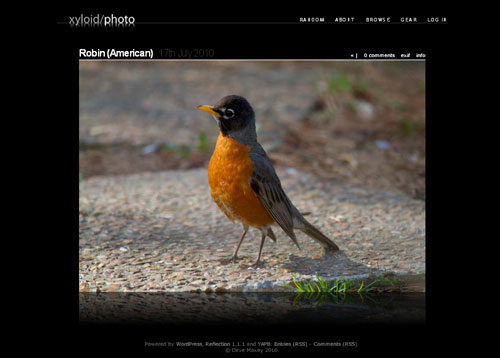 Most Beautiful WordPress Theme for Photographers - Reflection